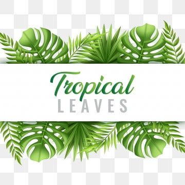 Bush Leaves Vector Material Palm Leaves Coniferous Plants Png Transparent Clipart Image And Psd File For Free Download In 2020 Tropical Leaves Tropical Tropical Frames Macaw seamless pattern transparent background vector. bush leaves vector material palm