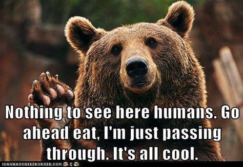 bear + paw