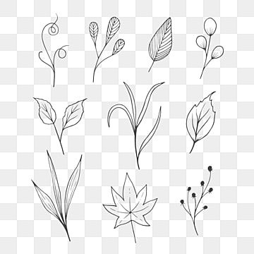 Variety Leaf Sketch Drawing Black And White Line Art On White Background Art Black Blooming Png Transparent Clipart Image And Psd File For Free Download In 2021 Leaves Sketch Black And