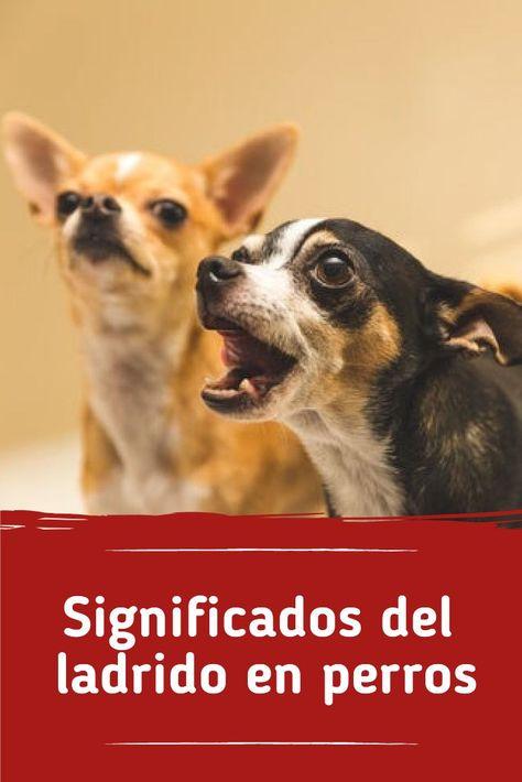 530 Ideas De Para Perros En 2021 Perros Mascotas Cosas Para Perros
