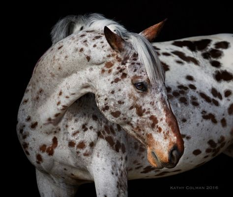Horse freckle beauty.