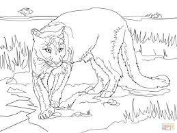 Resultado De Imagen Para Puma Concolor Lion Coloring Pages Animal Coloring Pages Coloring Pages