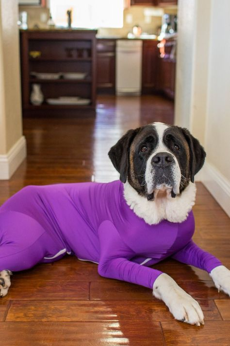 Omg These Ridiculous Dog Leotards Are Actually The Greatest Hack For Pet Owners Dogs Leotards Pets