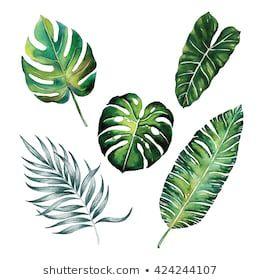 Benzer Tropikal Bolunmus Yapraklar Bitki Botanik Suluboya Nesne Yaprak Boyama Beyaz Arka Plan Illustrasyon Gorselleri Stok Fotograflar 2020 Tropikal Suluboya Bitki