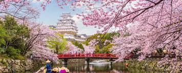 Japan Cherry Blossom 2020 Forecast When Where To See Sakura In Japan Live Japan Japanese T Japan Cherry Blossom Season Cherry Blossom Japan Himeji Castle