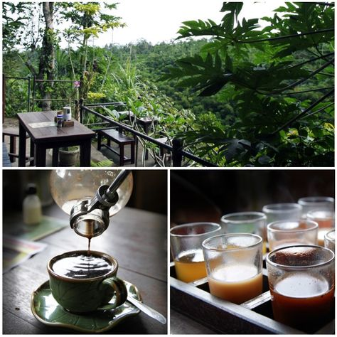 Kopi Luwak coffee tasting past Ubud in Bali
