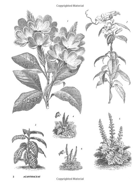Plants: 2, 400 Royalty-Free Illustrations of Flowers
