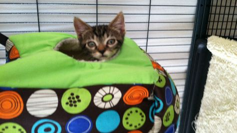 Idaho Humane society asking for help in finding kitten