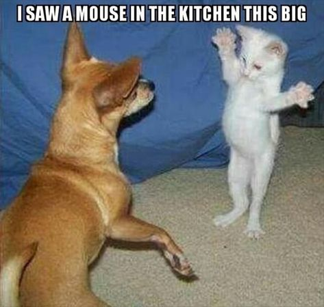20 Funny Animal Pictures Of The Day 20 lustige Tierbilder des Tages – lustige Tiere – täglich LOL Pics Funny Animal Jokes, Funny Dog Memes, Cute Memes, Funny Animal Videos, Cute Funny Animals, Memes Humor, Funny Quotes, Cute Animal Humor, Funny Animals With Captions