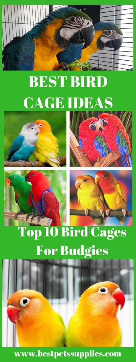 List of Pinterest pet birds cage parrots pictures & Pinterest pet