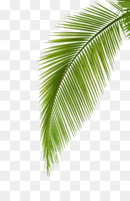 Palm Leaf Watercolor Png If you're thinking of using leaf png on a website, i suggest you reduce the size first. palm leaf watercolor png