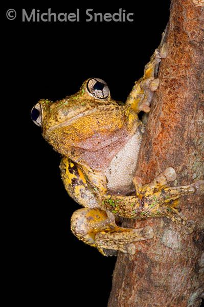 Australian Reptiles and Frogs | Michael Snedic