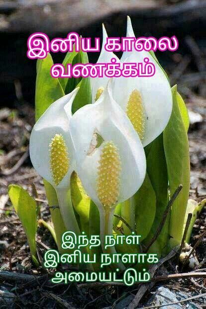 Pin By Devarajoo Narayanan On Tamil Good Morning Quotes Unusual Flowers Beautiful Flowers Rare Flowers