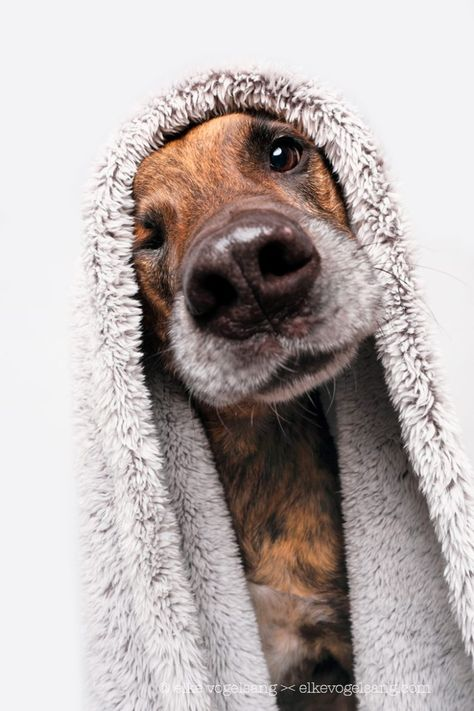 Dogs In Isolation Commercial Pet Photography By Elke Vogelsang Hildesheim In 2020 Dog Photography Dog Photograph Dog Photos