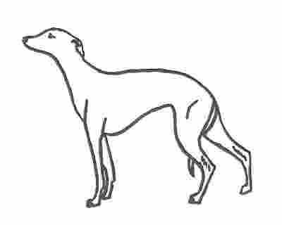 Coloring Pages Whippet Coloring Pages New 78 Printable Sheets