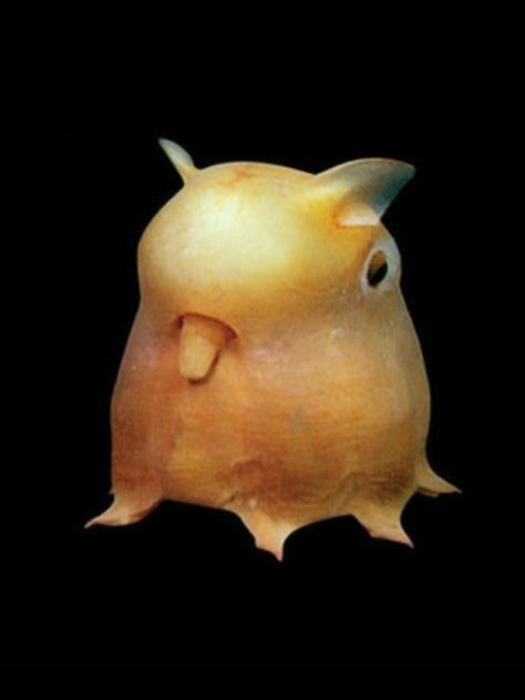 It is not a fantasy creature but a real deep sea animal