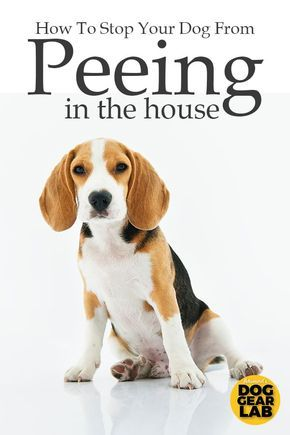 How To Stop Your Dog From Peeing In The House Dog Pee Smell