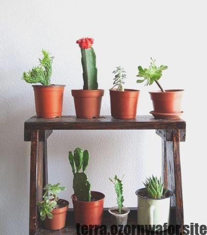 No Cost Summer Cactus Plants Indoor Perspective Plant Benefits Cactus Plants Growing Plants Indoors