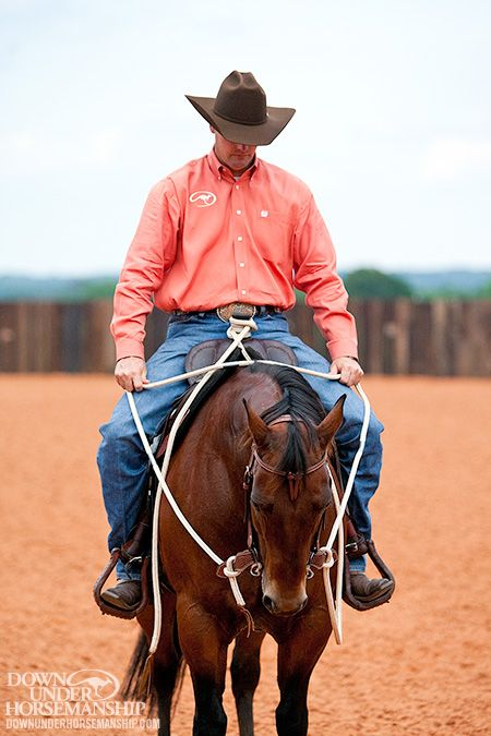 Release Tension in the Neck-Shoulders-Withers Junction - YouTube - equine release form