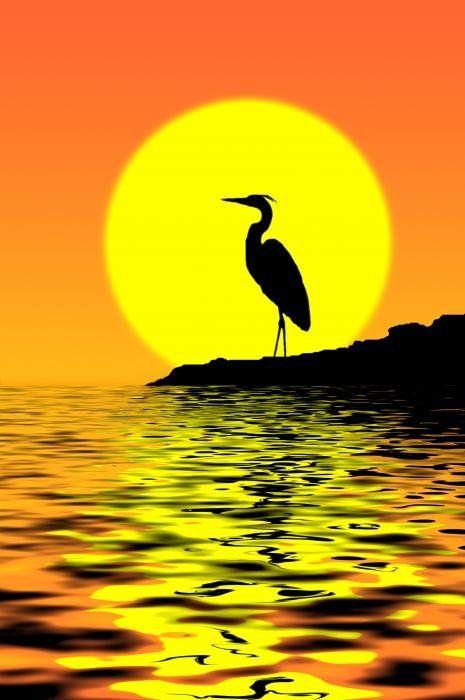 Blue Heron Sunset Print By Rich Leighton