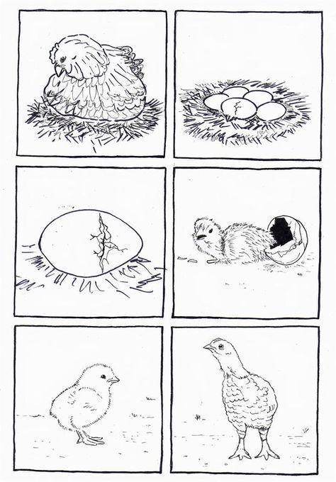 Vom Ei Zum Huhn Ostern Kindergarten Naturwissenschaften