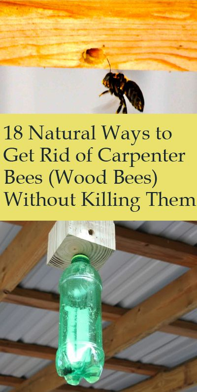 18 Ways To Get Rid Of Carpenter Bees How To Control Wood Bees Wood Bees Carpenter Bee Carpenter Bee Trap
