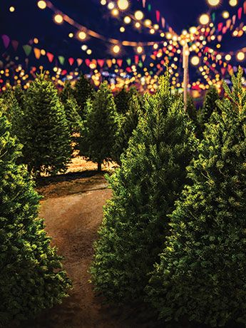 Christmas Tree Lot Backdrop Christmas Tree Lots Outdoor Christmas Tree Christmas Tree Farm