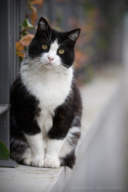 Untitled Mit Bildern Katzen Tiere Weisse Katzen
