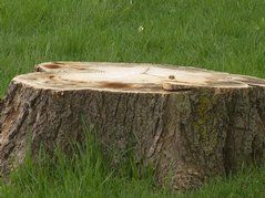 Out-Of-State Arborist Facing Charges