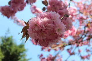Rachael Rabbit Recycled Cherry Blossom Tree Cherry Blossom Tree Cherry Blossom Blossom