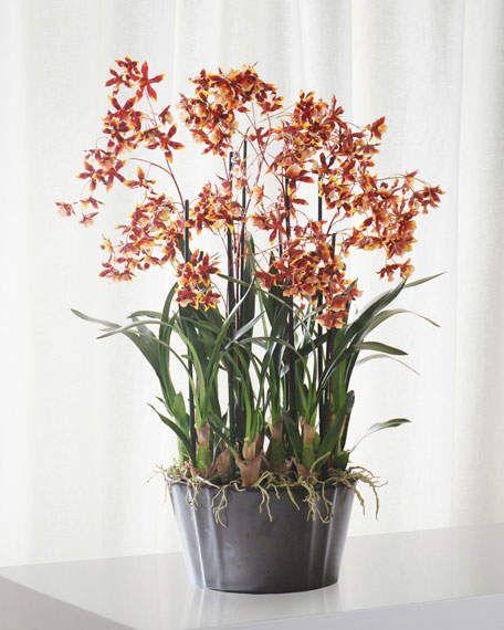 Winward Dancing Oncidium In Pot Oncidium Orchids Beautiful Orchids Orchids