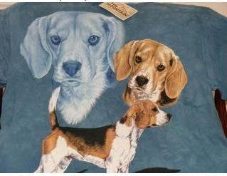Northern California Beagle Rescue Beagles Available For Adoption