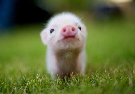 39 bébés animaux parmi les plus craquants du monde qui vous feront fondre de tendresse