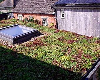 General Garden Storage Unit With Green Roof Planter Etsy In 2020 Sedum Roof Green Roof Green Roof Planting