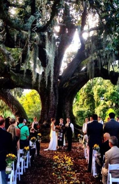Does It Get Any More Picturesque Than This New Orleans Party Rentals Provided The White Padded Folding Chairs New Orleans Wedding Wedding Rentals Nola Wedding