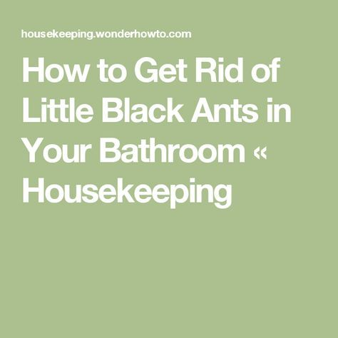 How To Get Rid Of Little Black Ants In Your Bathroom Black Ants Ants Insect Spray