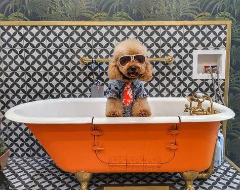 wednesdaymotivation ,bathtub ,dogshirt ,fashionkilla ,goldendoodle ,goldendoodles ,goldendoodlemoments ,goldendoodleoftheday ,doodletales ,doodlelove ,doodleloversofig ,doodlesofcalifornia ,puppiesofig ,poodle ,poodlemix ,teampixel ,pupjune2 ,doodlesfamily0612 ,smfndgs3 ,dogsofbark ,weeklyfluff ,ilovemydog ,doglifestyle ,losangeles ,photooftoday ,cutepets ,petofinstagram ,summer ,summertime...
