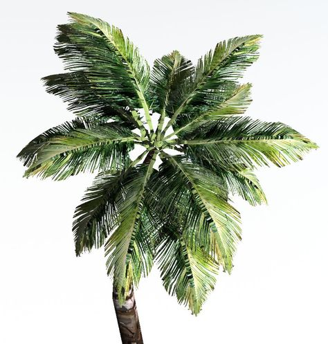 3d Palm Tree Dynamic 3d Model Palm Trees Palm Plant Leaves