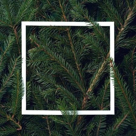 Frame Of Christmas Tree Branches With Space For Text Top View Christmas Tree Photography Tree Photography Christmas Tree Branches