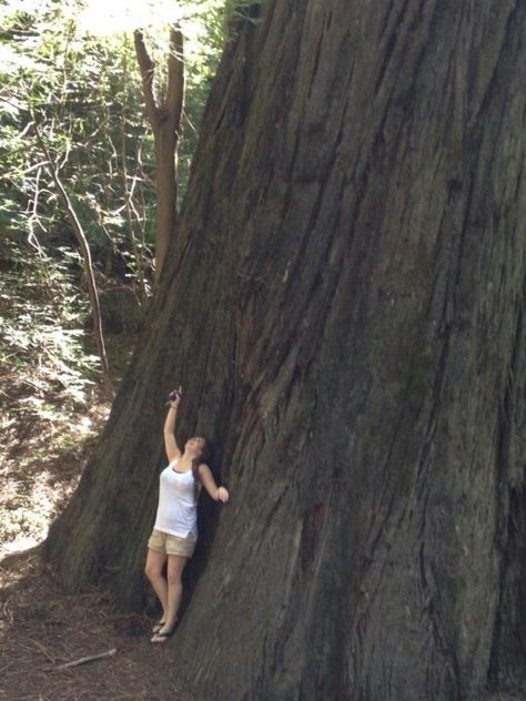 Jessica and the giant tree