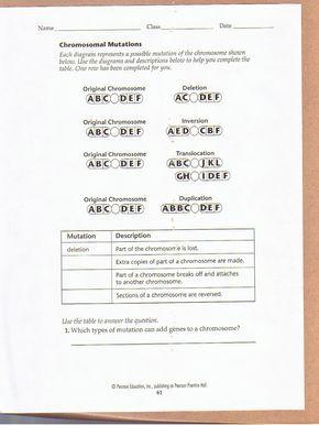 Chromosomal Mutations Worksheet With Images Teaching Biology
