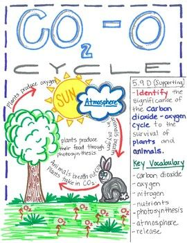 Open A Virtual School Onlinehighschoolfranchise Oninehighschoolforsale Onlineschoolforsale V Carbon Dioxide Oxygen Cycle Carbon Cycle Carbon Dioxide Cycle Carbon dioxide oxygen cycle worksheet