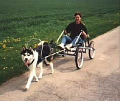How To Have Fun Carting With A Dog Pets Dog Harness Dog
