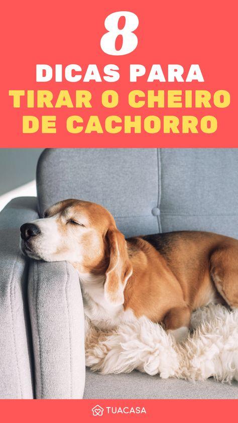 8 dicas caseiras para eliminar o cheiro de cachorro da sua casa