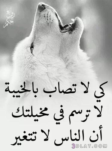 حكم و أمثال و كلام من ذهب حكم وأقوال رائعة ومتنوعة Arabic Calligraphy Drawings Calligraphy