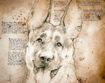 Contour Line Drawing Leonardo Da Vinci : Leonardo da vinci drawings of animals google search art