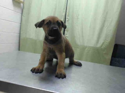 05 16 16 Houston Extremely High Kill Facility This Dog Id