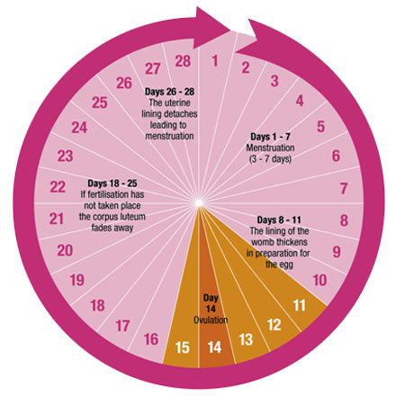 Use This Menstrual Cycle Calculator To Calculate Your Next