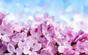 Znalezione Obrazy Dla Zapytania Tapeta Na Pulpit 3d New Ideas Flower Wallpaper Free Flower Wallpaper Lilac Flowers