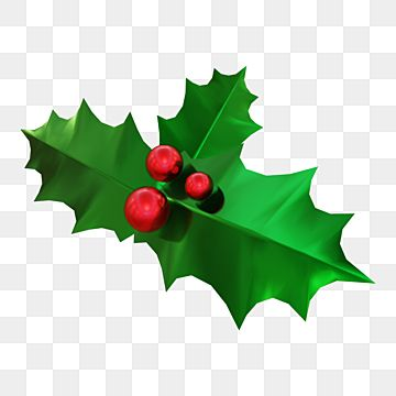 Holly Leaves Decoration With Red Berries Holly Leaves Clipart Holly Christmas Png Transparent Clipart Image And Psd File For Free Download Leaf Decor Red Ornaments Holly Decorations